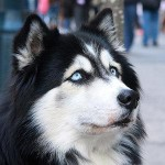 Training Your Dog to Listen to You