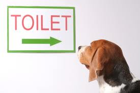 Potty training a Dog.