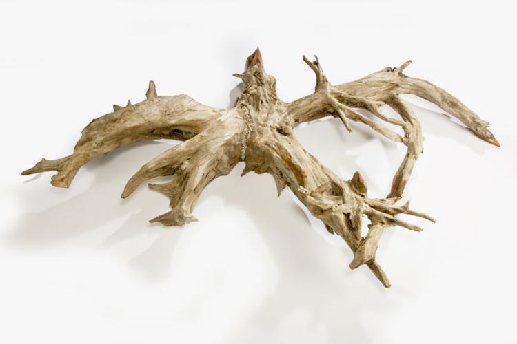 root7_129320111925.jpg